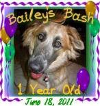 BaileysBash