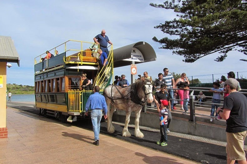 victor-harbor-horse-trams-1