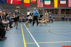 20130510-Bullmastiff-Worldcup-1024.jpg
