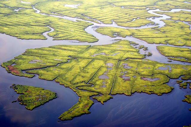 Wetlands on the coast of Connecticut.  The ditches were dug decades ago to drain the marshes and reduce mosquito populations.