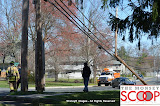 Car Into Pole In Front Of 164 East Eckerson Rd - DSC_0051.JPG