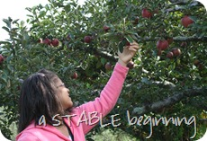 GML apple picking 2012 100