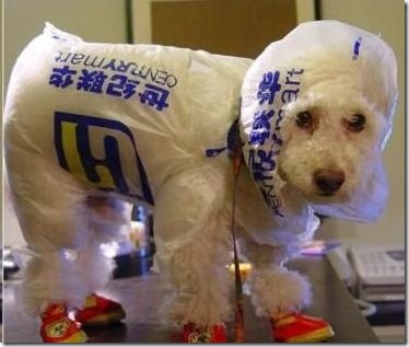 hurricane-sandy-dogs-21
