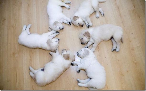 funny-animals-cute-41