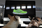 If we order shoes like that, do you think we'll run as fast as Mr. Quiggly?  Just think about it - the squirrels around here wouldn't stand a chance!