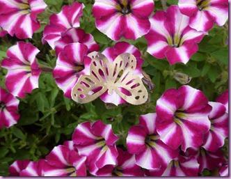 farfalle in giardino (3)