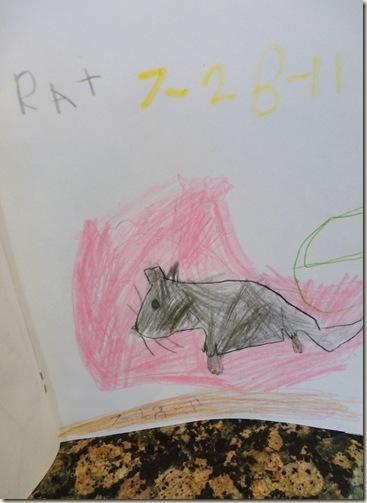 Pets 014