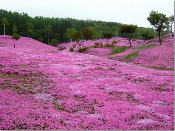pink-park-japan-10