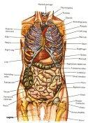 Complejidad del cuerpo humano