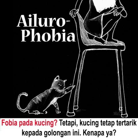 fobia kucing