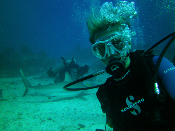 Shark diving st martin