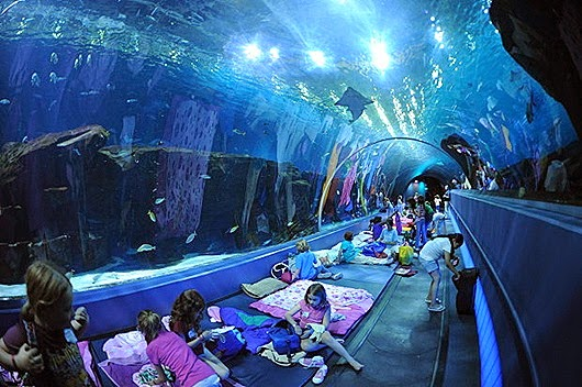 Sleepover at Aquarium