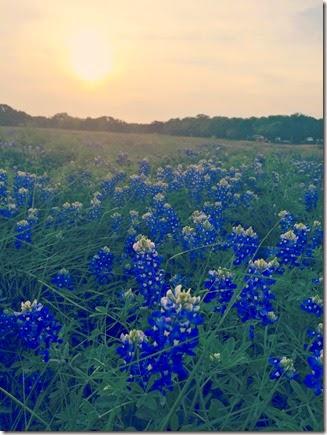 TexasSpring
