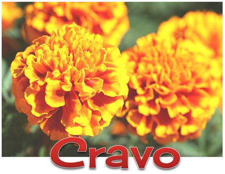 4 CRAVO