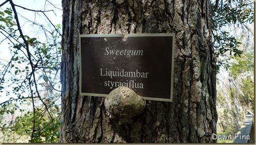 Magnolia Plantation_278