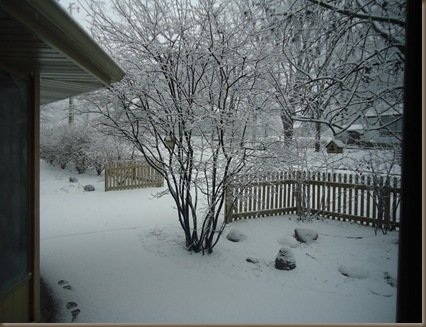 Snow 1 2013