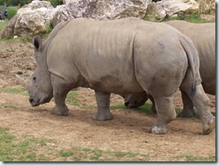 2004.08.25-050 rhinocéros