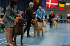 20130510-Bullmastiff-Worldcup-0368.jpg
