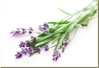 lavender-isp