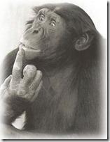 monos piensan blogdeimagenes (8)