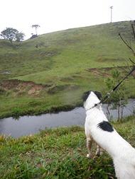 Dogs Trekking 4 (266)
