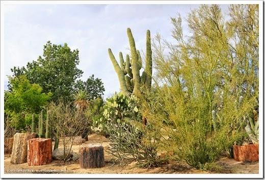 141231_Tucson_Bachs_0062