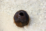 A Washed Up Coconut On The Beach - Lifou, New Caledonia