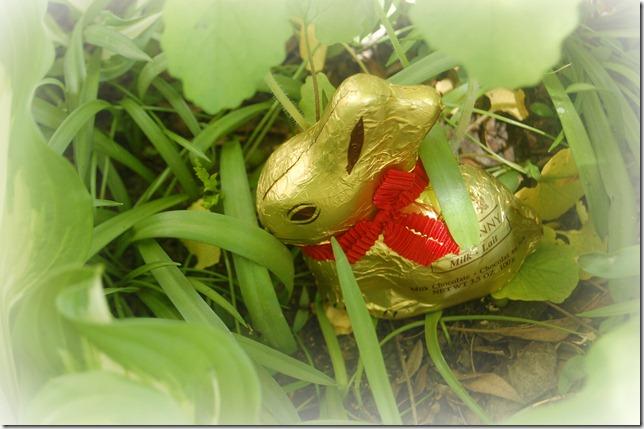 bunnyhiding