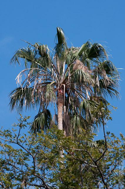 61. А вот и первая пальма.