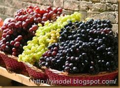 Влияние погодных условий на рост винограда 2