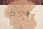 Boutonnieres were made out of small air plants.