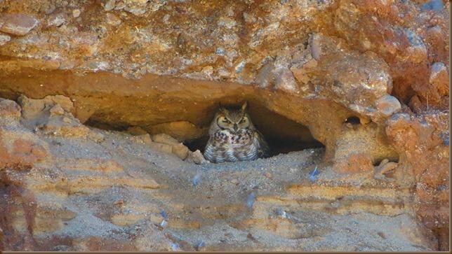 Geri's owl