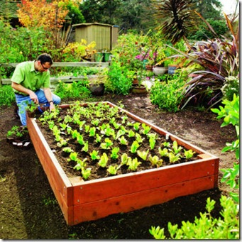 raised-bed-main-l
