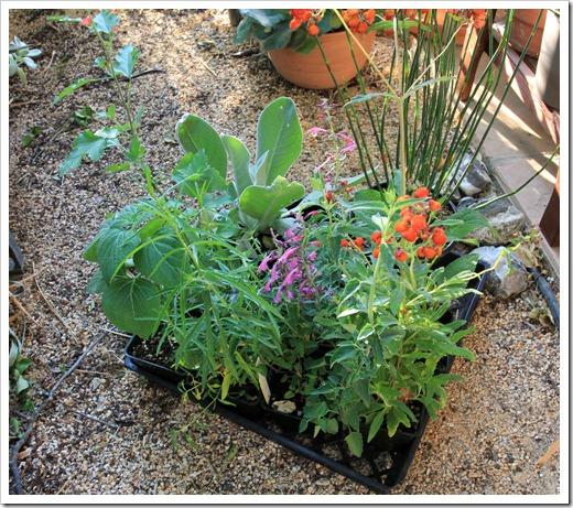 130503_plants