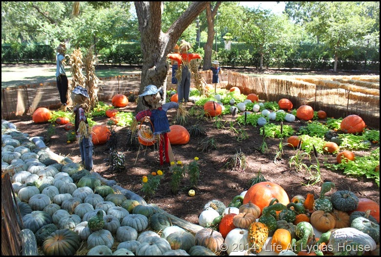 Dallas Arboretum - pumpkin festival-scarecrow garden 1
