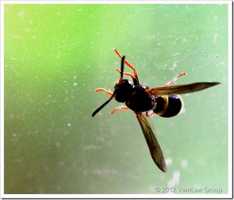 WaspIMG_1047