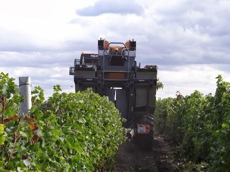 Basarabia - Drumul Vinului:  Recoltare mecanizata a strugurilor
