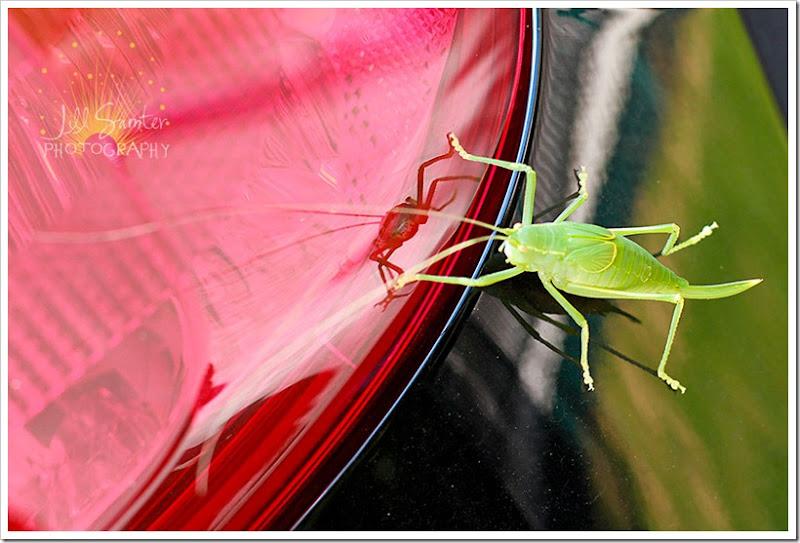 grasshopper-6190