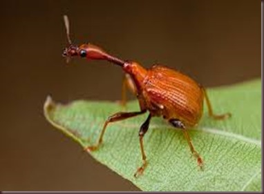 Amazing Pictures of Animals, photo, Nature, exotic, funny, incredibel, Zoo, Giraffe weevil, Insecta, Alex (9)