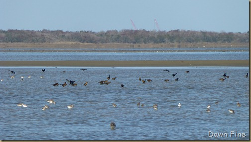 Pea Island NWR_046