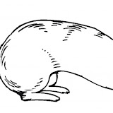 ferret-17-coloring-page.jpg