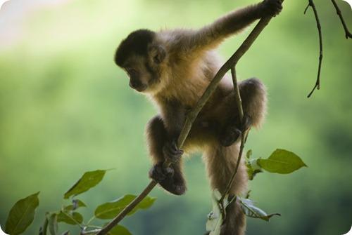 parque-nacional-el-rey mono