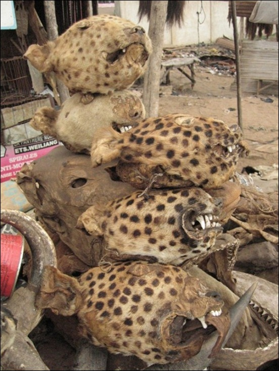 World's Largest Voodoo Market - Togo Akodessewa 06