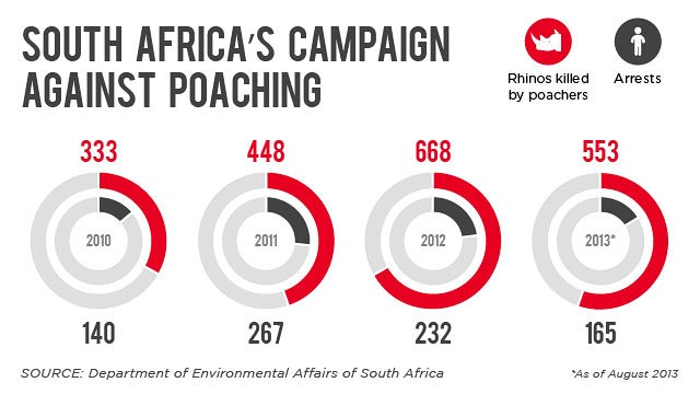 South Africa's campaign against rhinoceros poaching, 2010-2013. Graphic: CNN / Department of Environmental Affairs of South Africa