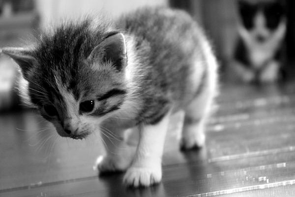 kattunger2
