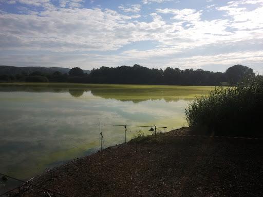 Les algues vertes de Belfort