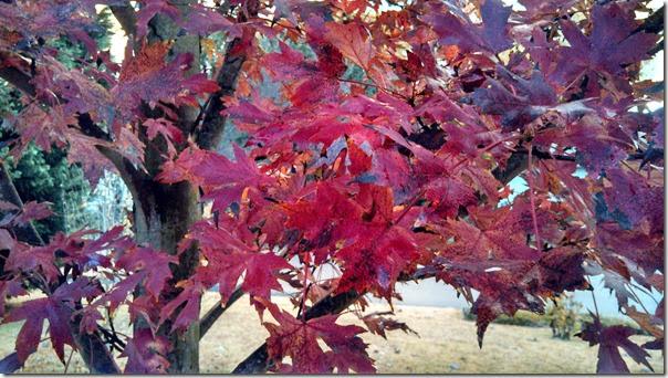 Fall (5)