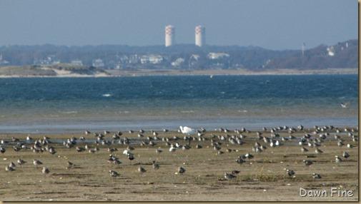 Birding south beach_094