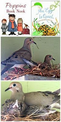 An-Egg-Is-Quiet-Bird-Watching