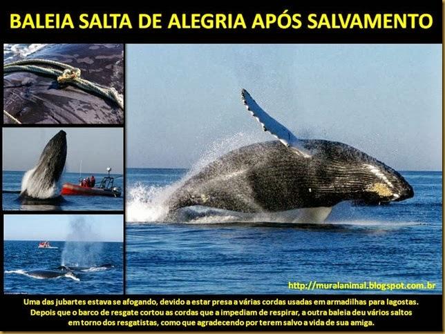 BALEIA SALTA DE ALEGRIA APÓS SALVAMENTO